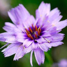 10 Plants for Late-Summer Color - carolannie@ccgmail.net - ccgmail.net Mail