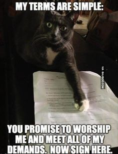 funny cat terms meme 26 Funniest memes on the internet