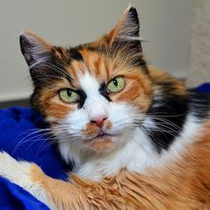Daphnie's purr is unlike any other -- she coos like a dove!