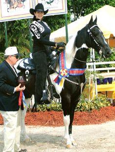 American Saddlebred, Western Pleasure, Westerns, Horses, Animals, Animales, Animaux, Animal, Animais