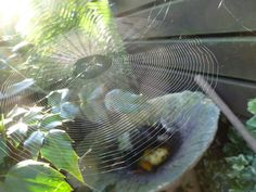 seeing freshly spun spiders web