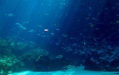 Conoce cómo se reproduce el ser vivo más exótico del océano (video)