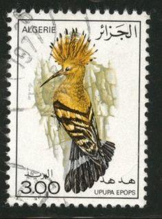 Algeria stamp with hoopoe