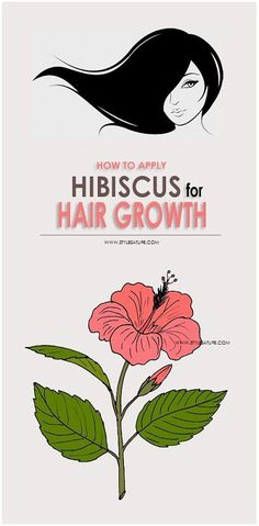Hibiscus is an excellent treatment for hair. Check Out this article for How to use Hibiscus for Hair Growth and also for hair problems like split ends, dandruff, and dryness, dullness and hair damage.