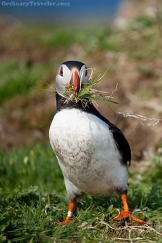 Puffin Therapy in Scotland