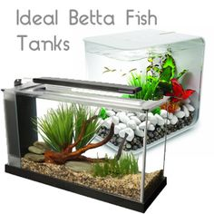 Betta fish betta and fish on pinterest for What do i need for a fish tank
