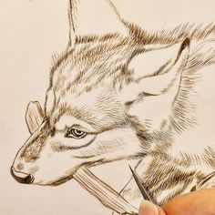 "Wolf painting in progress 9"" x 12"" detail sepia watercolor on board Rebecca Latham  #wildlife #watercolor #art #animal #painting #miniature #artist #miniatureart #realism #animallovers #wolf #timberwolves #puppy #workinprogress #naturalism"