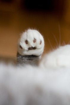 A Tiny Paw   Cutest Paw
