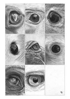 Bleistiftzeichnung Augen Tiere 1 DIN A4 von Josef Hinterseer