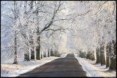Ehitud allee, Decorated alley by Remo Savisaar. White and frosty winter in Estonia.
