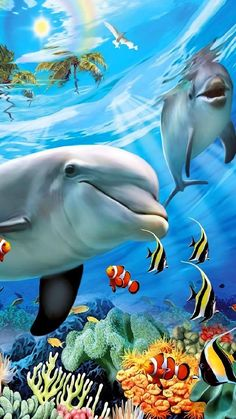 Enjoy wackyhabitat curated sea art seaart just for fun and sharing! Underwater Animals, Underwater Painting, Underwater Life, Dolphin Images, Dolphin Art, Beautiful Nature Wallpaper, Beautiful Ocean, Beautiful Places, Beautiful Sea Creatures