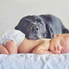 Dog & Baby - ideas for newborn pictures awe! Hope my dogs can sit still for a sec love this