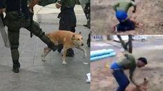 Ask Facebook to close dog punching & kicking page! | YouSignAnimals.org