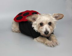 Make your pooch an outfit that transforms her into a butterfly, ladybug or other winged wonder.