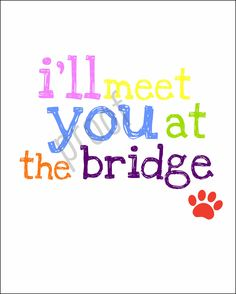 Just this side of heaven is a place called Rainbow Bridge. When an animal dies that has been especially close to someone here, that pet goes to Rainbow Bridge. There are meadows and hills for all of our special friends so they can run and play together.