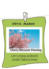 Cherri Blossom Viewing in March 2014
