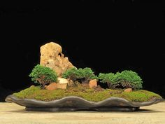 small bonsai art #garden
