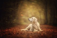 golden in autumn by Danny Block on 500px