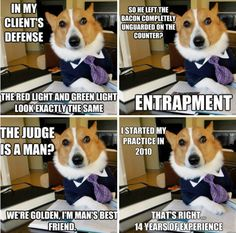 "OMG..do NOT miss the dog that cant run...or Maymo! LOL!!! ""Lawyer dog"""