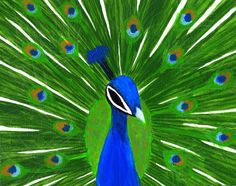 Images For > Colorful Peacock Images