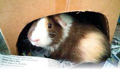 Pumpkin is a Folio Weekly reader, too! 💖💖
