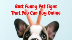 Best Funny Pet Signs That Will Make Your Mood Dog Signs, Funny Signs, Funny Memes, Swear Word Coloring Book, Coloring Books, Dog Shaming, Love Pet, Life Memes, Book Activities