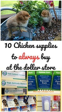 Chicken Coop - - 10 Chicken supplies that you can buy at the dollar store and save a ton of money. Building a chicken coop does not have to be tricky nor does it have to set you back a ton of scratch. Portable Chicken Coop, Backyard Chicken Coops, Diy Chicken Coop, Chicken Ideas, Chicken Feeders, Inside Chicken Coop, Small Chicken Coops, Chicken Garden, Chicken Recipes