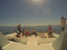 Kelp Forest, Cape Town, Scuba Diving, Shark, Opera House, Diving, Sharks, Opera