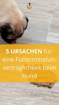Immer wieder kommt es vor, dass es Hunden nach dem Essen nicht gut geht. Wenn es deinem Hund genau so geht, dann kannst du hier nachlesen, was Ursachen für eine Futtermittelunverträglichkeit sein können. Irish Setter, West Highland White Terrier, Tricks, Blog, Animals, Animal Clinic, Dog Owners, Vet Office, Red Setter Dog