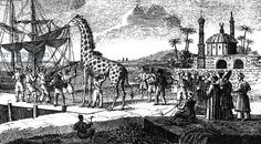 boarding of Zarafa giraffe in Sennar, she was given by ottoman sultan MehemetAli to French king CharlesX, arrived in 1826 in France, engraving