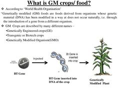 how long have genetically modified foods been used gmo answers  genetically modified foods essay genetically modified crops and food security