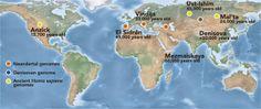 Fig. 1: i genetisti hanno completato la sequenziazione di 3 tipi umani che vissero nell'ultima era glaciale: il Neandertal (arancio); il Denisova (blu) e il Sapiens (giallo) (2). Immagine da http://rosarubicondior.blogspot.it/2014/03/ringing-changes-sex-in-siberia.html
