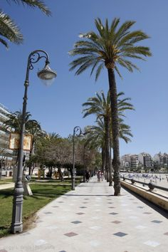 Benidorm boulevard, palmtrees
