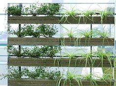 「植物 ルーバー」の画像検索結果