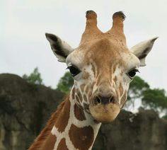 7 Best Animals Images On Pinterest Cutest Animals Animals