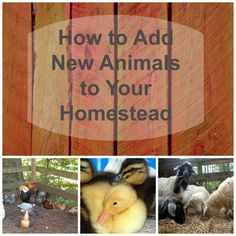 How do you know when it is possible or a good time to add to your herds and flocks?