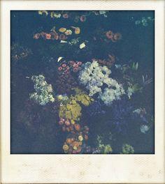 Polaroid / Flowers
