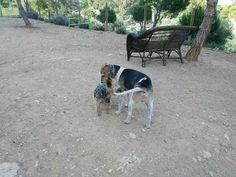 En el parque canino 05/16