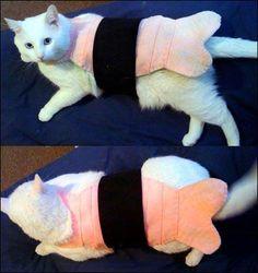 Sushi cat clothing
