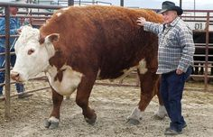 A Proud Farmer showing off his Bull