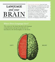 the role of the brain in acquiring and developing language in children Language acquisition and its brain five tips for parents to assist language development: 1 you can greatly increase language acquisition in a child but how.