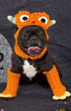 Dog Monster Costume to crochet for your pet... @Mariah Maser - too bad neither one of us could crochet. lol