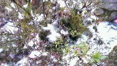 宜蘭太平山的雪。20131228。