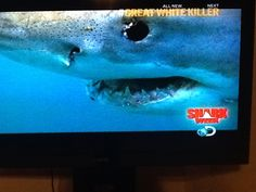 Great white shark is number two on the most deadly list. Expert hunters