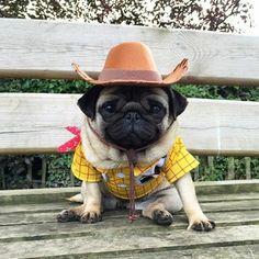 Happy Sunday, humans! ・・・ www.jointhepugs.com ・・・ #pug #pugpower #pugsnotdrugs #puglife #puglove #mops #cuteness #puglover #dogs #dogsofinstagram #pugstagram #dogsofinstaworld #instapug #pugoftheday #hermoso #carlino #pugsdaily #pets #pugsforever #pugnation