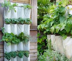 DYI Hanging Garden Planters. Turn a shoe organiser into a vertical garden.  Thought this is such a good idea for a small space or small yard. drought tollerant herbs are suggested.