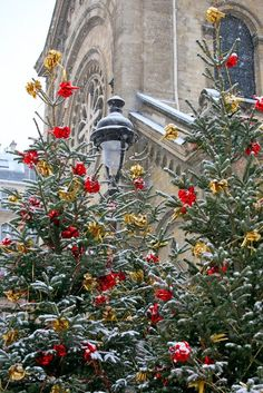 01-26-2016 red and gold in the trees. Cathédrale Notre-Dame at Xmas, Paris.