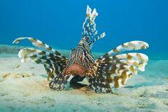 Naama Bay, Sharm el-Sheikh, Egypt Marine Photography, Ocean Aquarium, Sharm El Sheikh, Present Day, Ocean Life, Tropical Fish, Marine Life, Ancient Egypt, Trip Planning