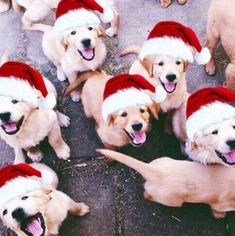 Christmas Puppy, Merry Little Christmas, Christmas Animals, Cozy Christmas, Christmas Morning, Christmas Time, Christmas Poster, Christmas Bedroom, Christmas Drinks