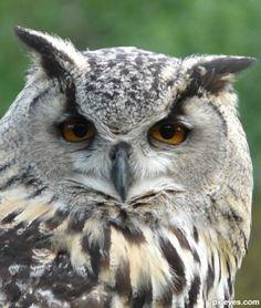 Wise-Old-Owl-4cc3064070788.jpg